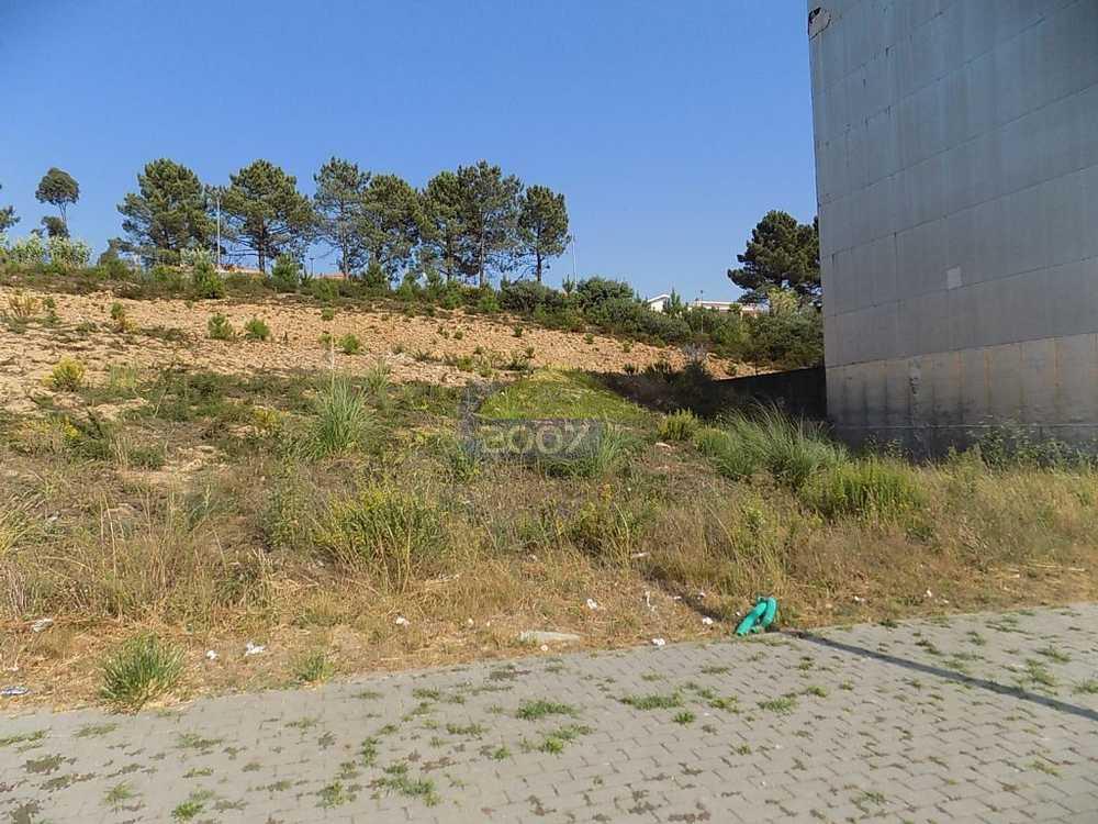 Louredo Santa Maria Da Feira terrain picture 101919