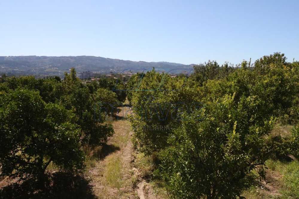 Ferreiros Amares terrain picture 103092