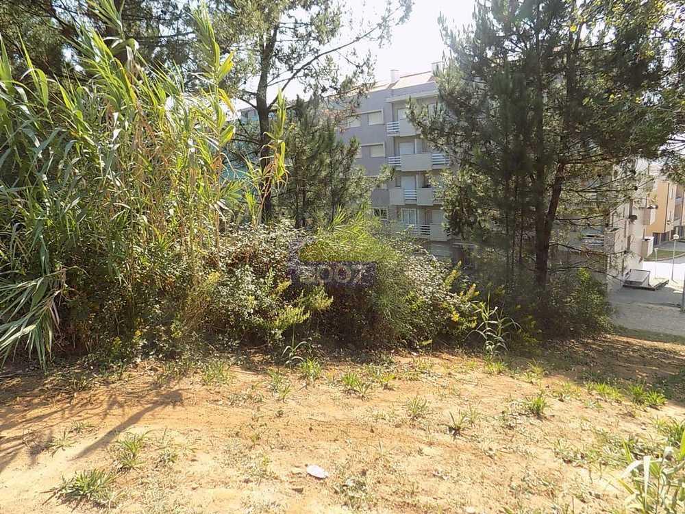 Caldas de São Jorge Santa Maria Da Feira terrain picture 101920