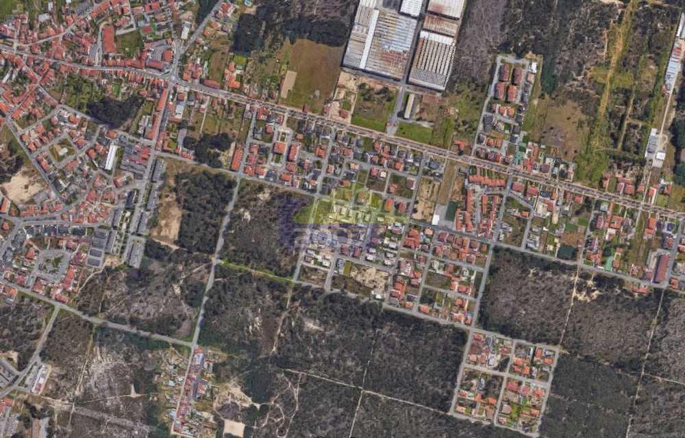 Monte Belo Almodôvar terrain picture 101942