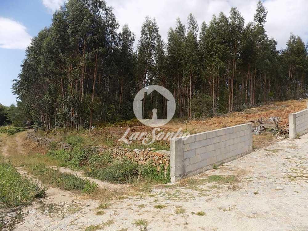Lousado Vila Nova De Famalicão terrain picture 102740