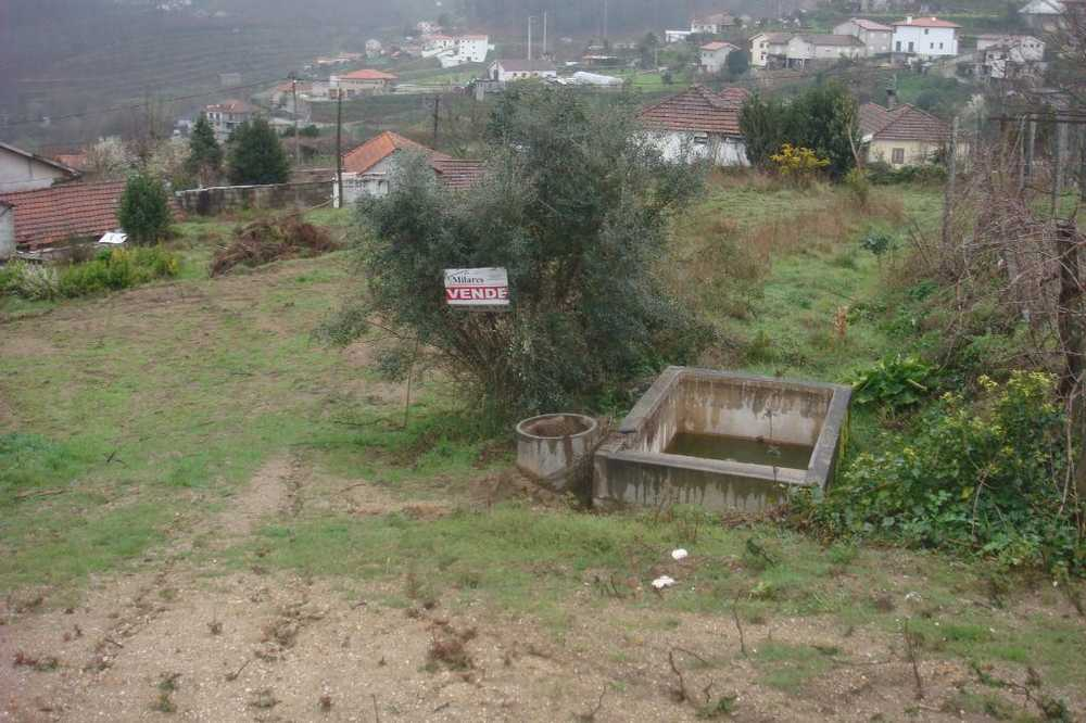 Lufrei Amarante terrain picture 103917