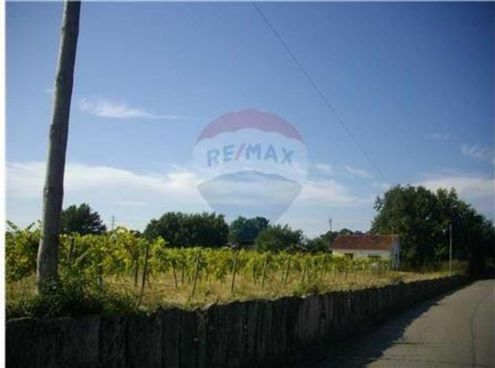 Cortes Monção terrain picture 103466