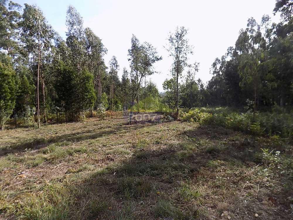 Espinho Espinho terrain photo 101923
