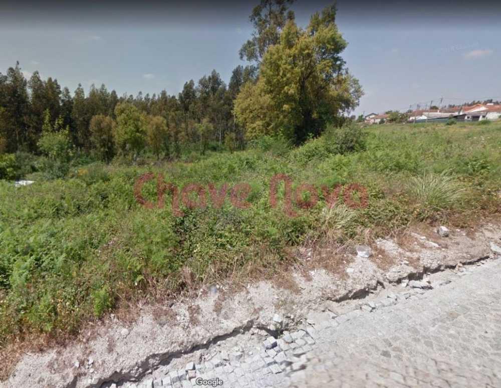 Santiago do Bougado Trofa terrain picture 103755