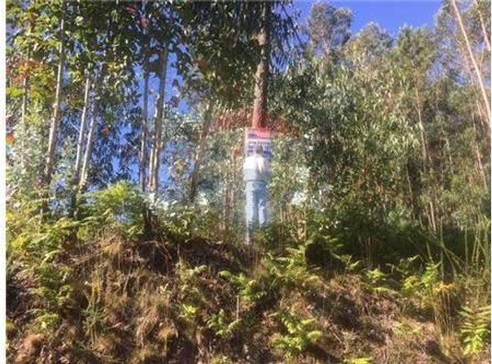 Guisande Santa Maria Da Feira terrain picture 103179