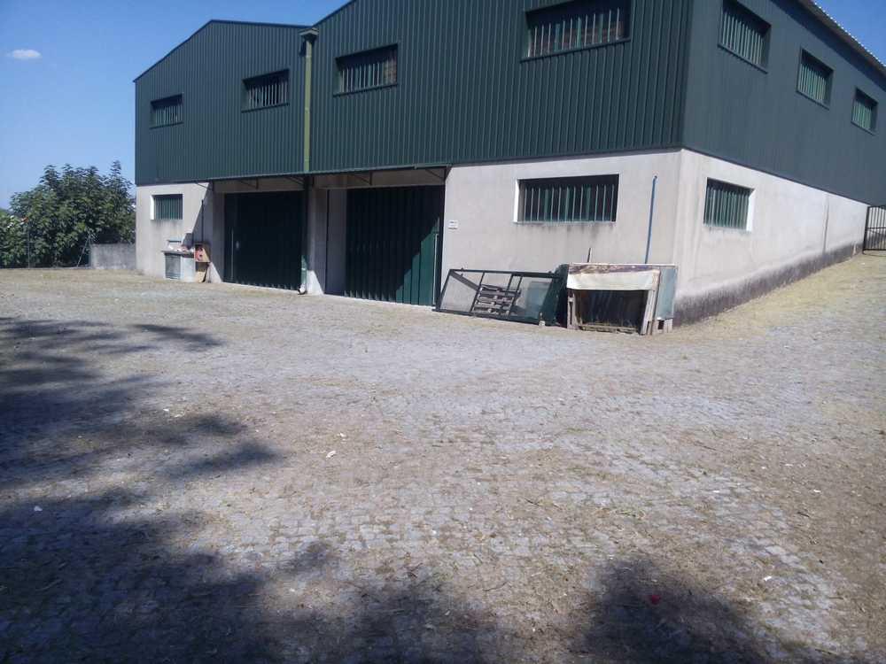 Paredes Amarante commercial picture 106984