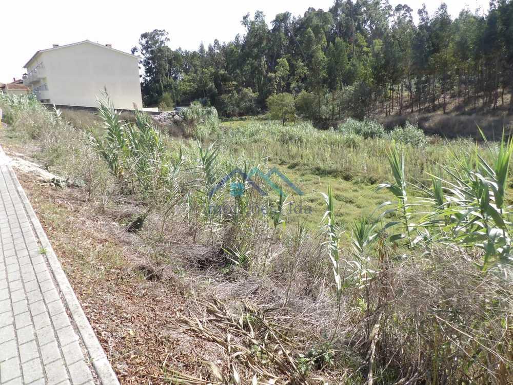 Sangalhos Anadia terrain picture 106892
