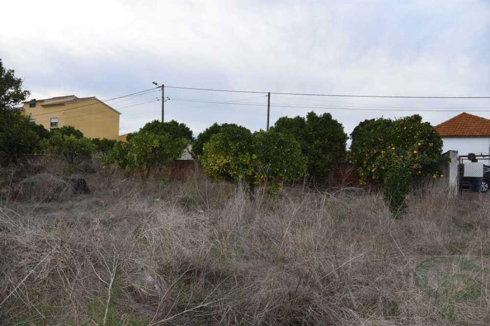 Vale da Pedra Cartaxo terrain picture 109603
