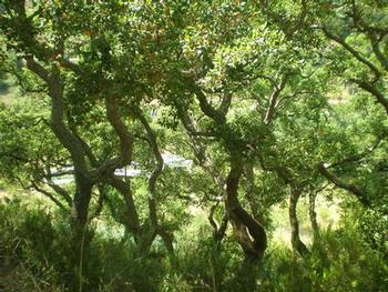 Carvoeiro Lagoa (Algarve) terreno  photo