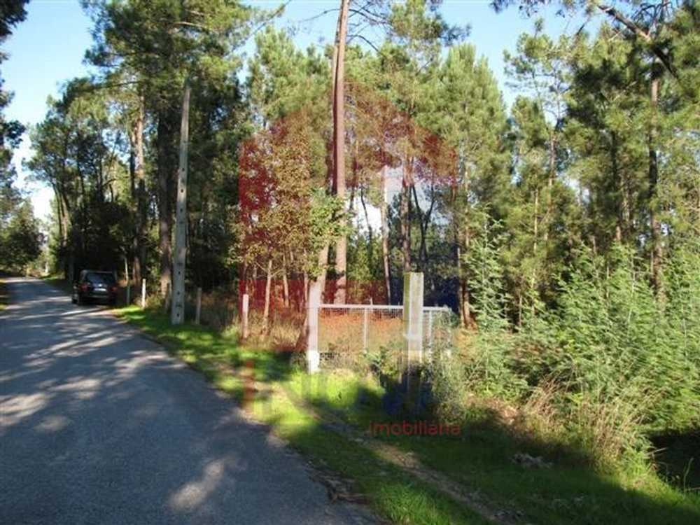 Ponte Vila Verde terrain picture 115383