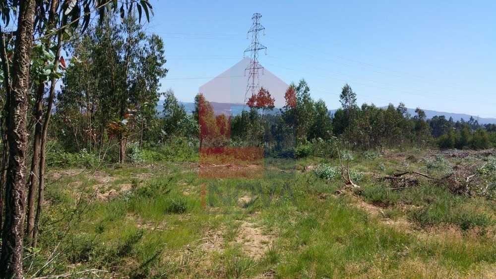 Atiães Vila Verde terrain picture 115159