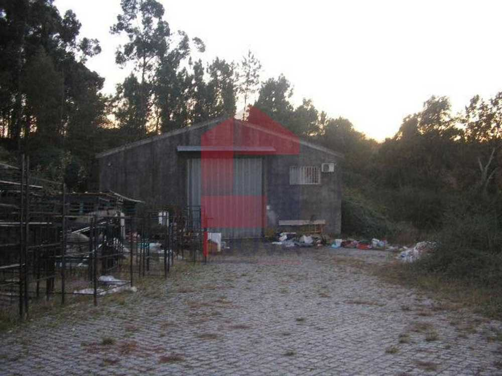 Loureira Vila Verde house picture 115421