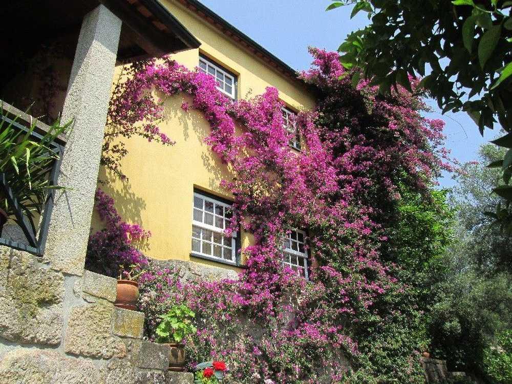 Ponte de Lima Ponte De Lima house picture 114199