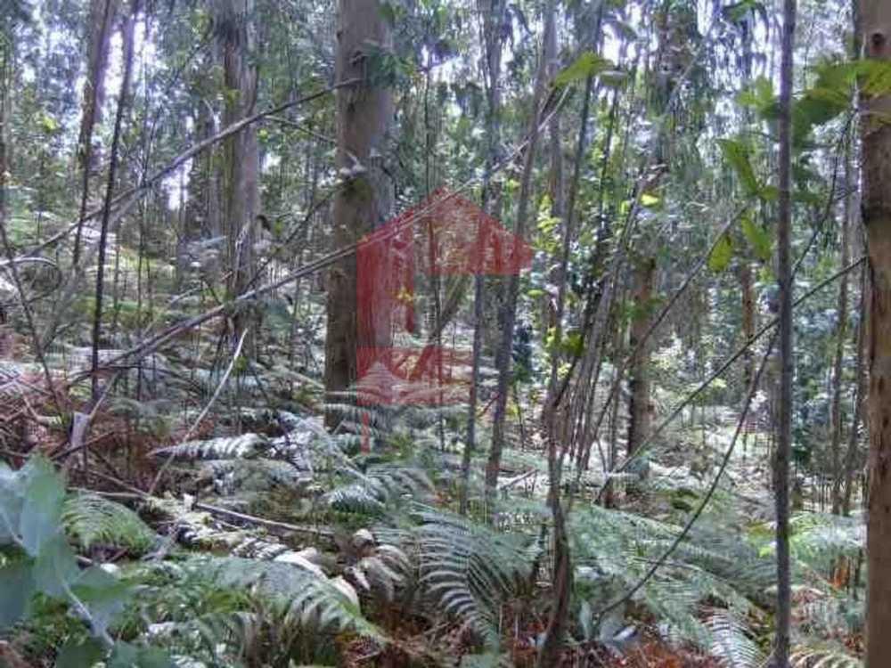 Esqueiros Vila Verde terrain picture 115259