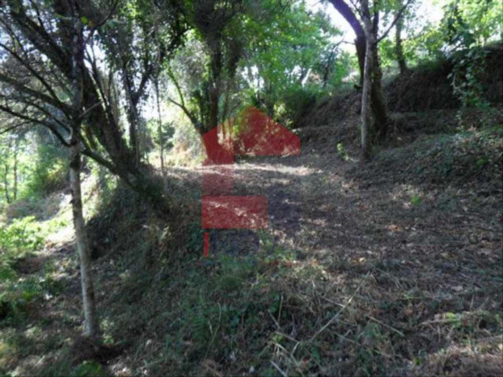 Souto de Aldeia Vila Verde terrain picture 115290