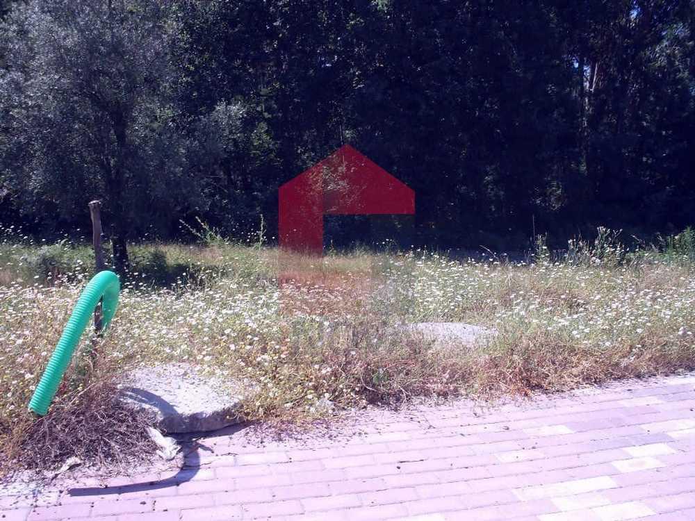 Soutelo Vila Verde terrain picture 115319