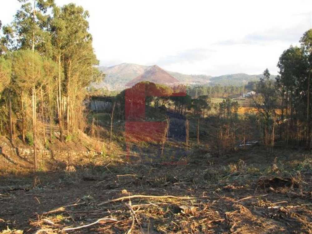 Lanhas Vila Verde terrain picture 115386