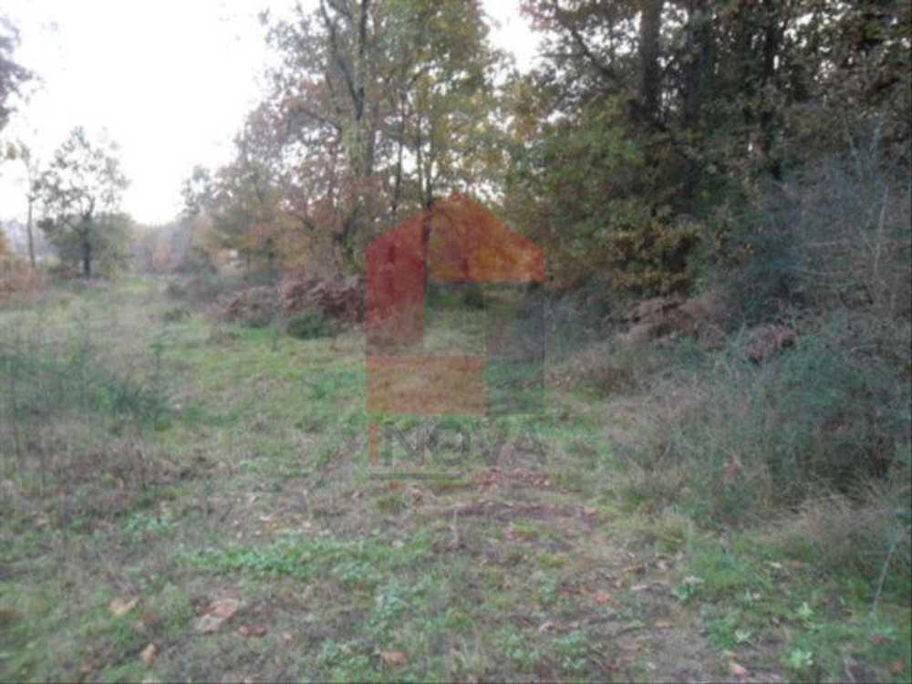 Soutelo Vila Verde terrain picture 115279