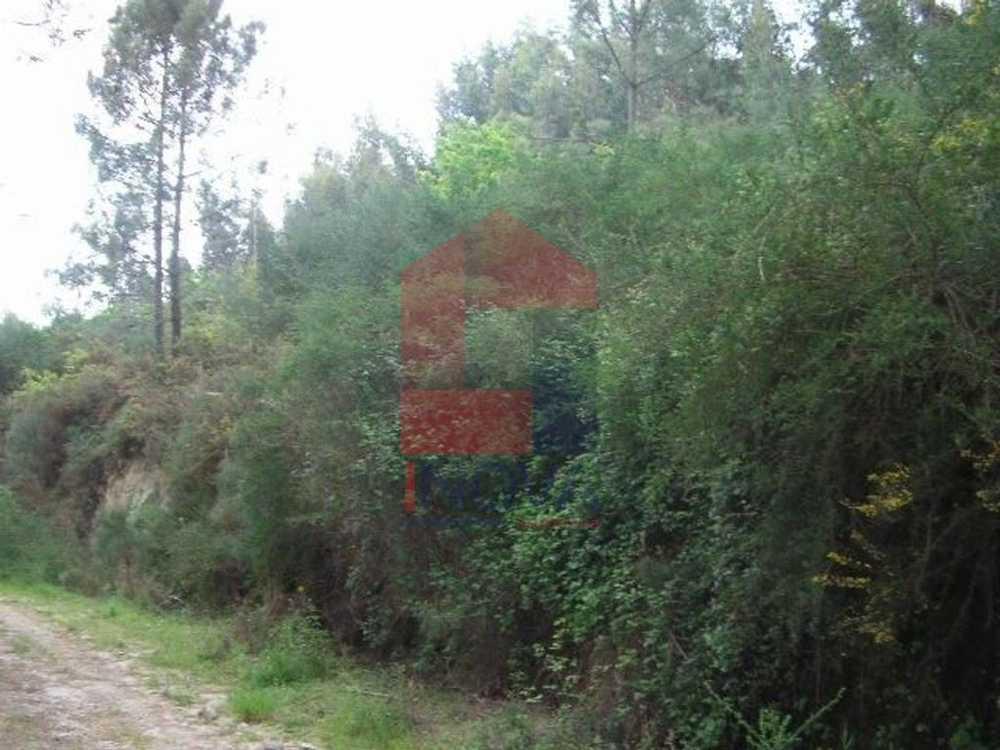 Esqueiros Vila Verde terrain picture 115460