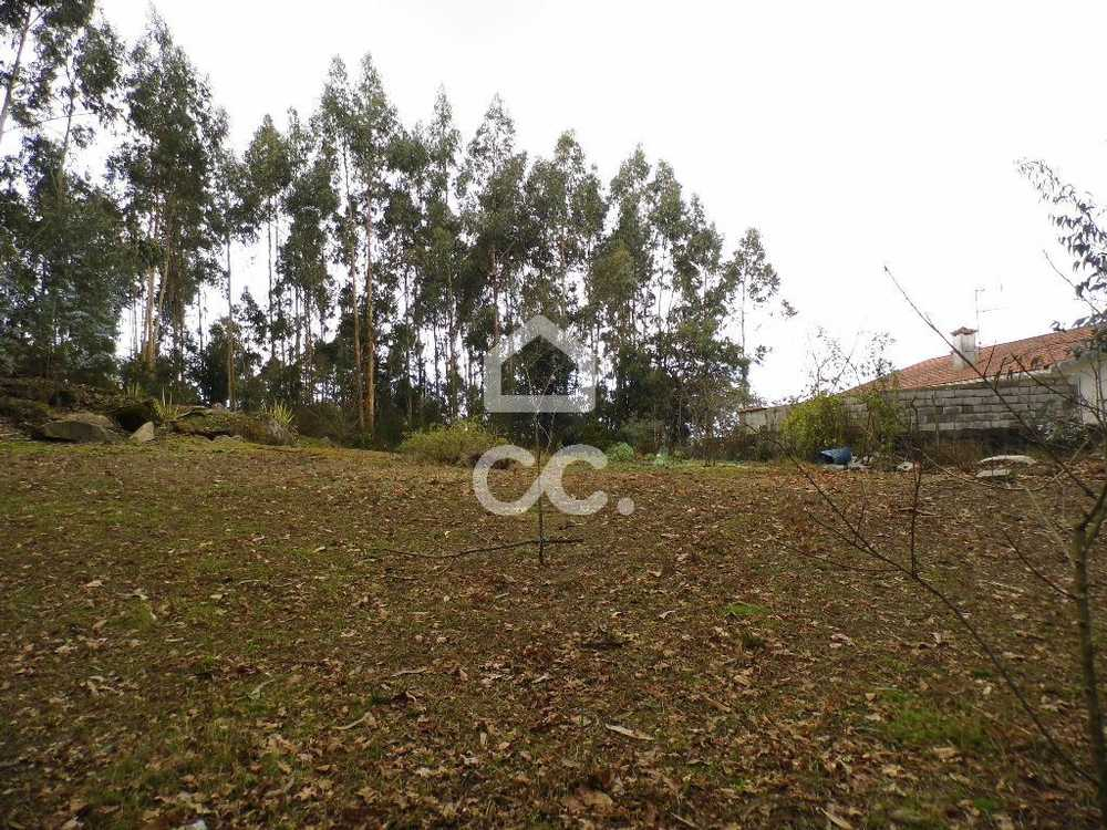 Brufe Vila Nova De Famalicão terrain picture 112750