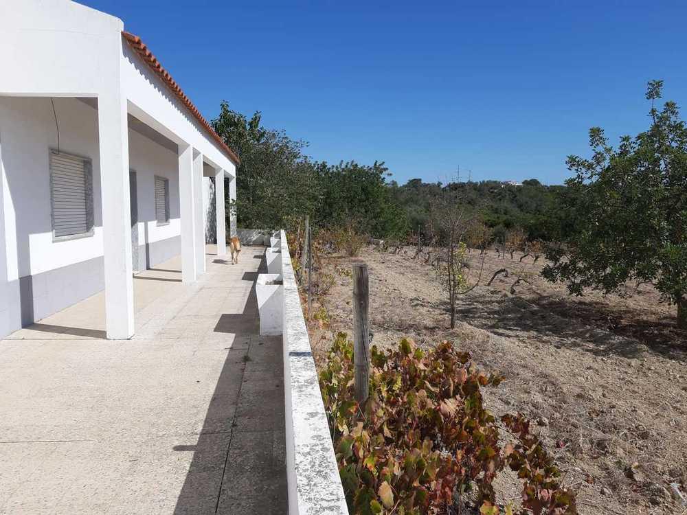 Ponta do Farol Lagoa (Algarve) Villa Bild 115996