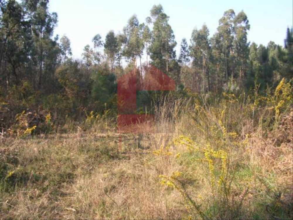 Lage Vila Verde terrain picture 115351