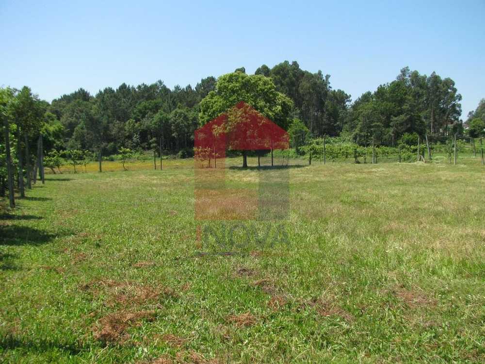 Coucieiro Vila Verde terrain picture 115123