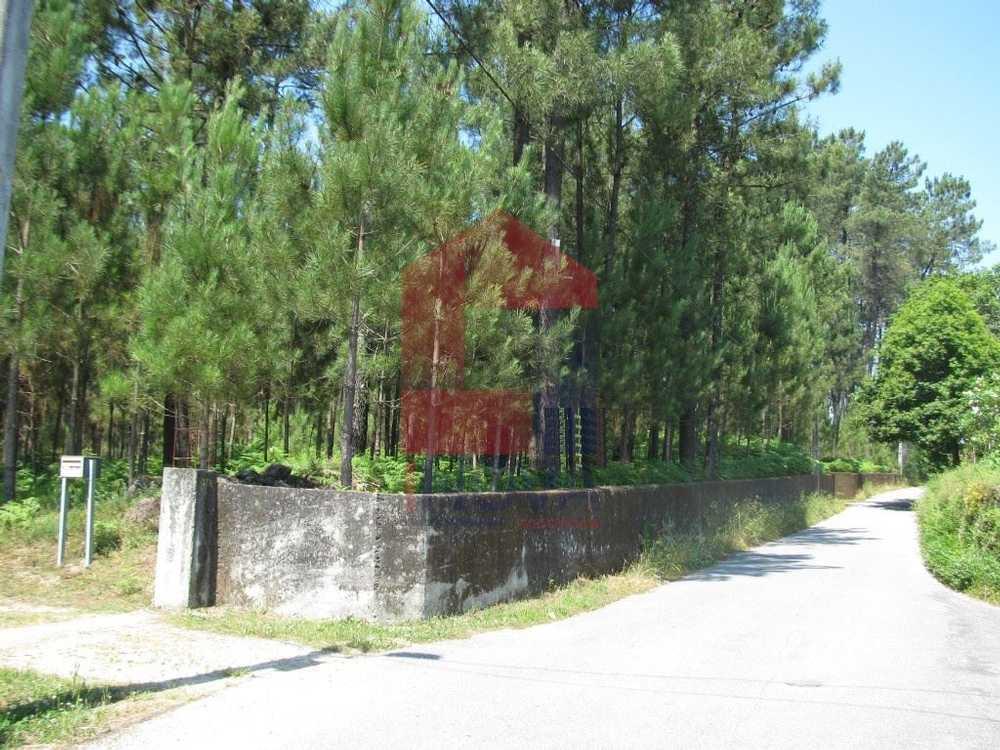 Ponte Vila Verde terrain picture 115099