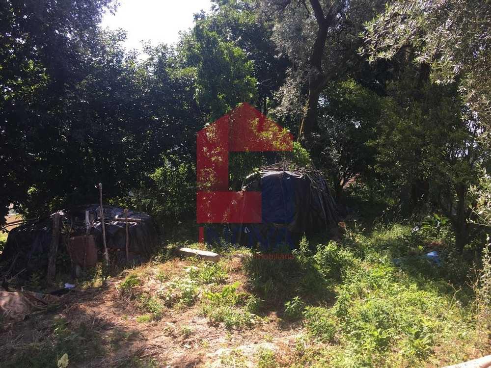 Souto Novo Vila Verde terrain picture 115086