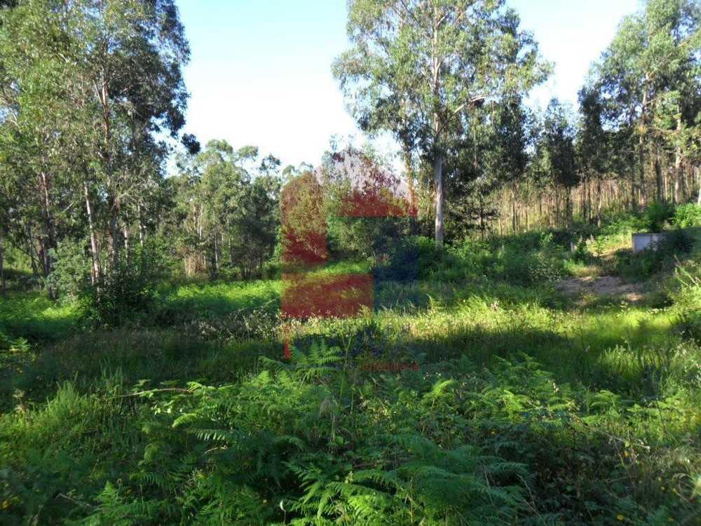 Soutelo Vila Verde terrain picture 115307