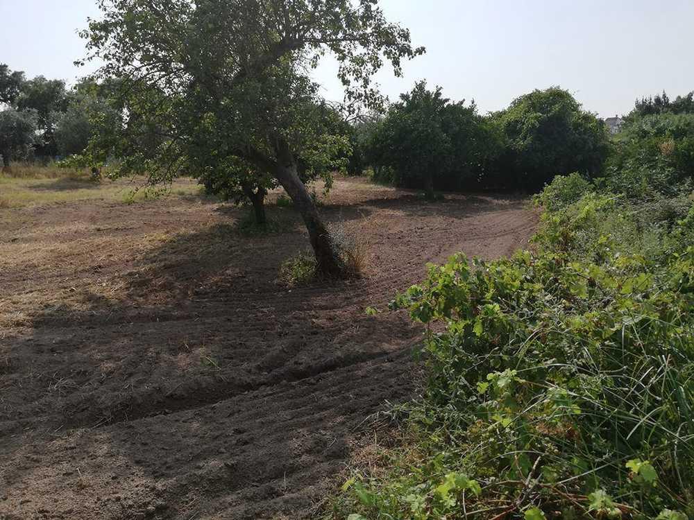 Alagoa Portalegre terrain picture 114903