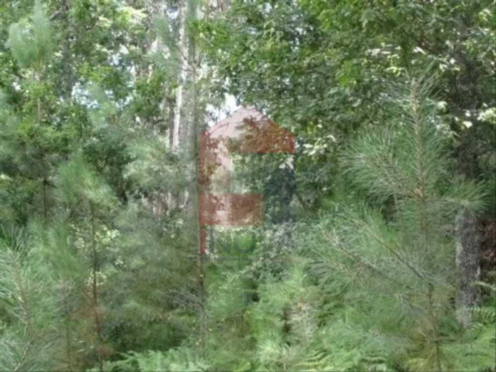 Bezeguimbra Vila Verde terrain picture 115303
