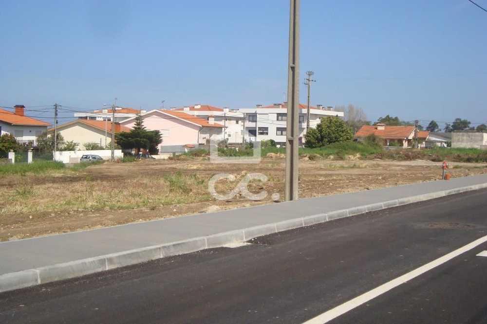 Fialhinho Almodôvar terrain picture 112798