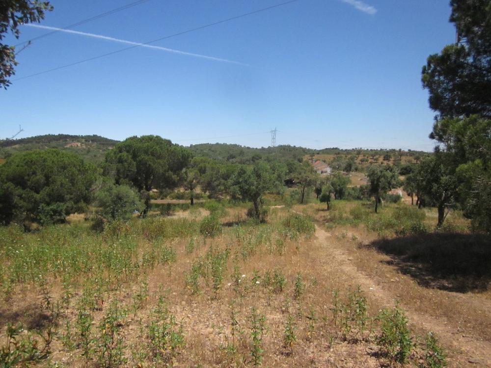 Penalva Barreiro estate picture 4224