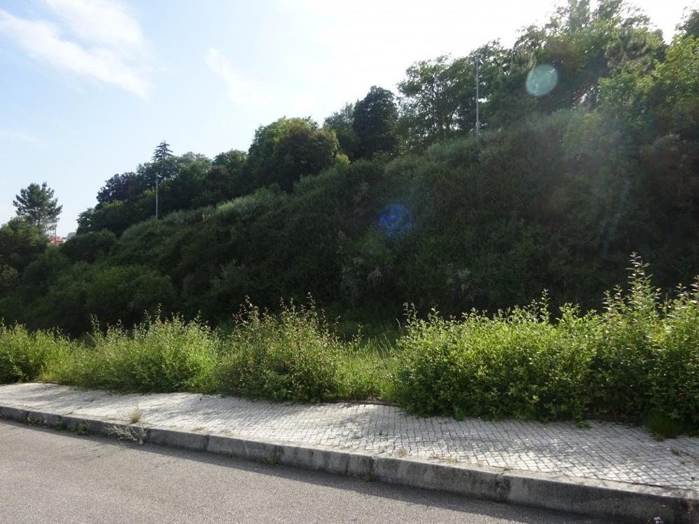 Várzea da Serra Tarouca terrain picture 4715