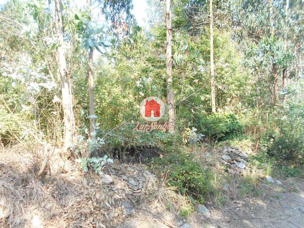 Lousado Vila Nova De Famalicão terrain picture 54279