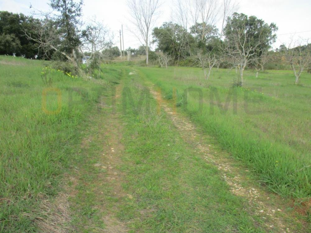 Atalaia Vila Nova Da Barquinha terrain picture 12352