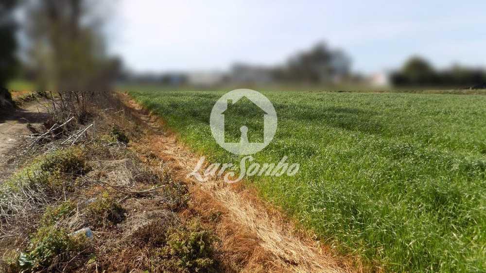 Fajozes Vila Do Conde terrain picture 53356