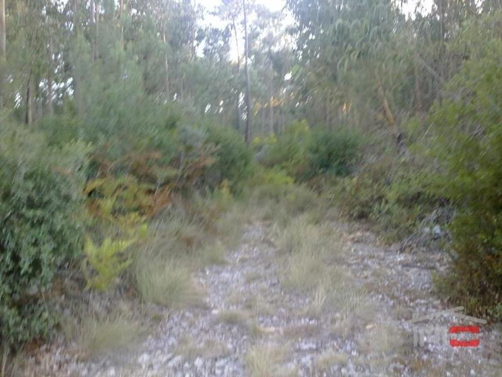 Fátima Ourém Grundstück Bild 11342