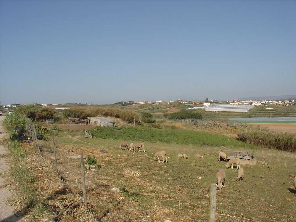 A dos Cunhados Torres Vedras terrain picture 55278
