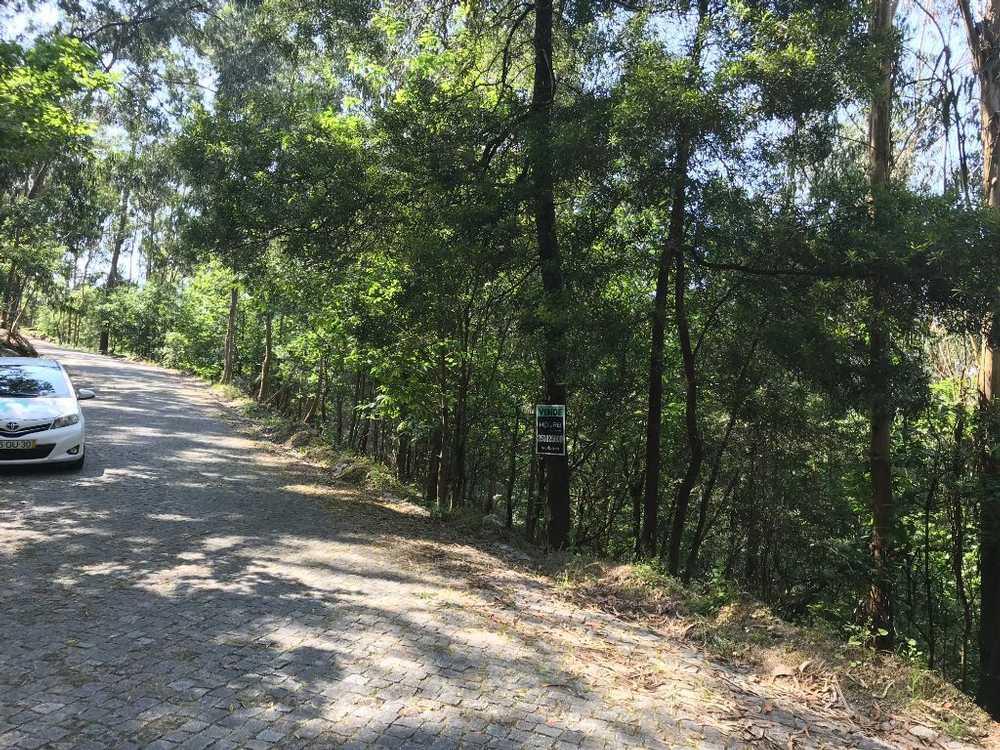 Carvalhal Barcelos terrain picture 48862