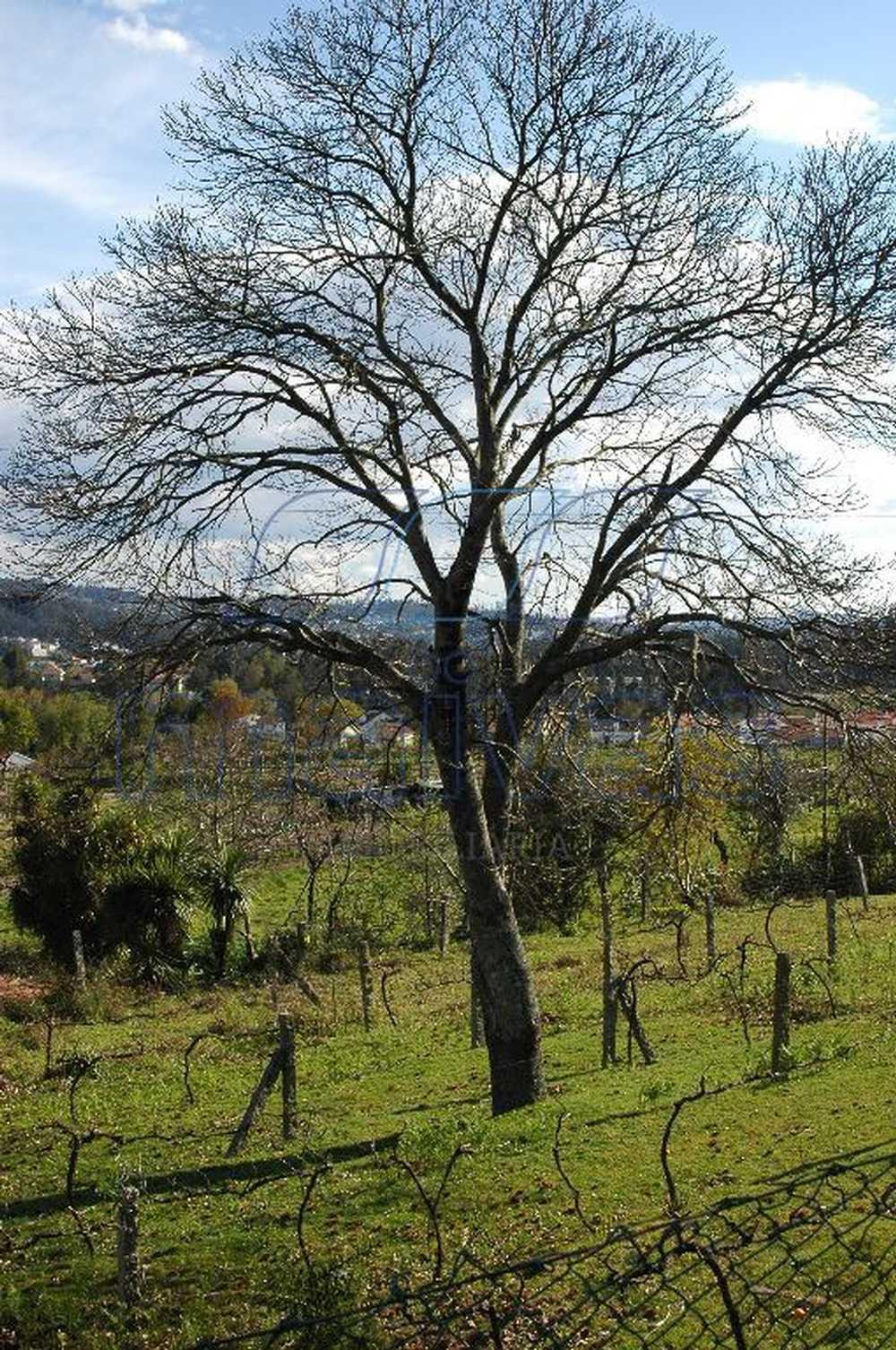 Sabugueiro Paredes De Coura terrain picture 51607