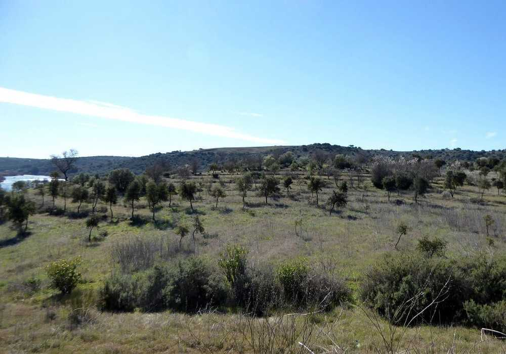 Baleizão Beja terrain picture 50010