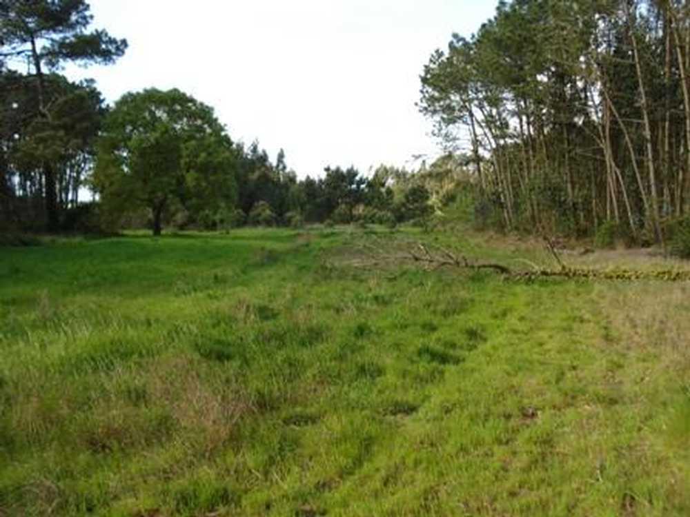 Tornada Caldas Da Rainha terrain picture 38171