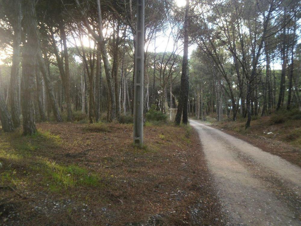 Montelavar Sintra terrain picture 7778