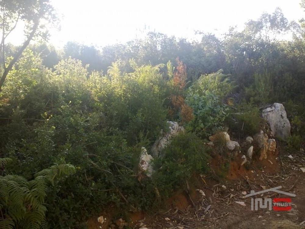 Fátima Ourém Grundstück Bild 11343