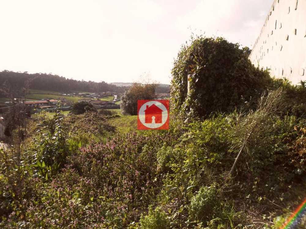 Paradela Barcelos terrain picture 53427