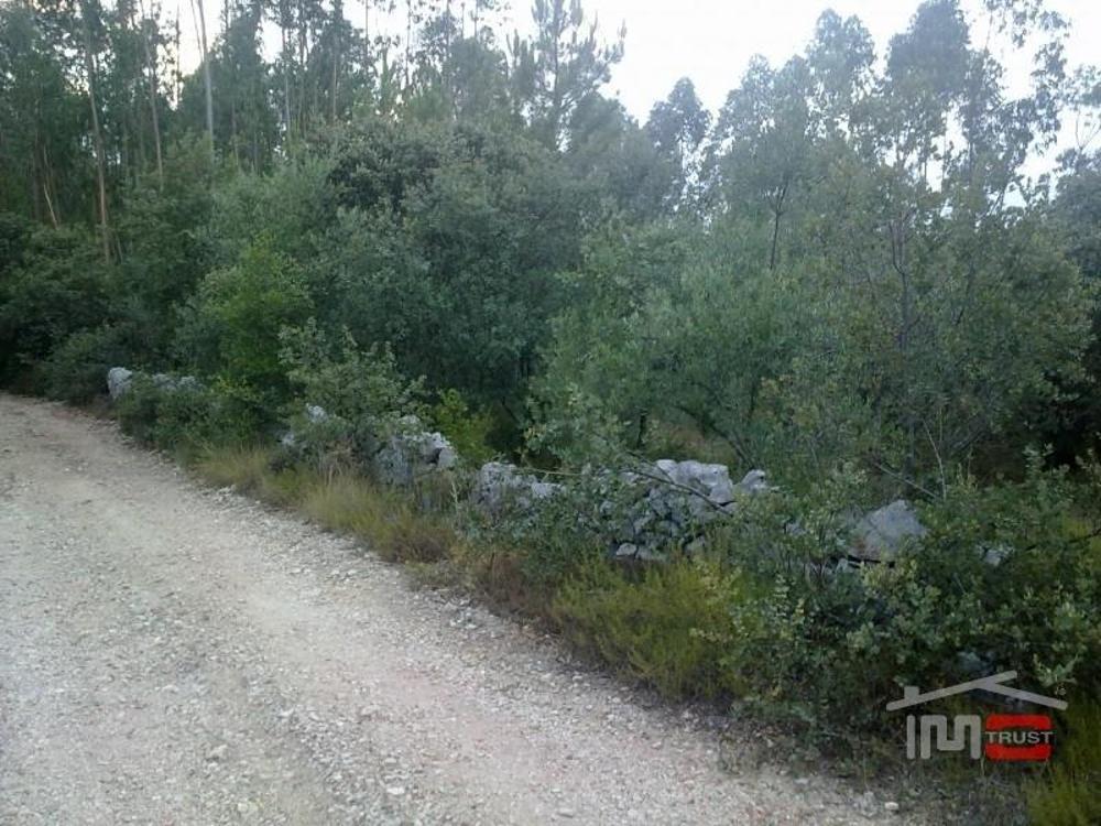 Fátima Ourém Grundstück Bild 11345