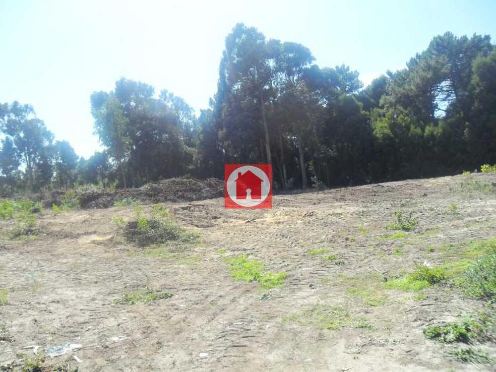 Árvore Vila Do Conde terrain picture 53397